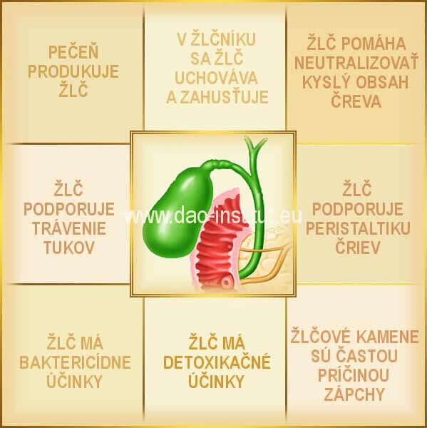 anatómia-funkcie žlčníka