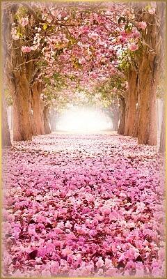 deň bohyne kvetov-sakura