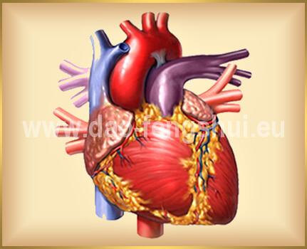 tradičná čínska medicína - srdce