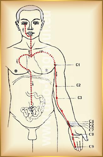 tradičná čínska medicína dráha meridián srdca