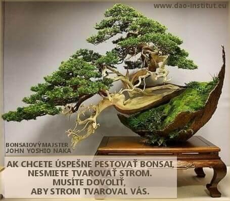 dao-dharma_11-11-bonsai