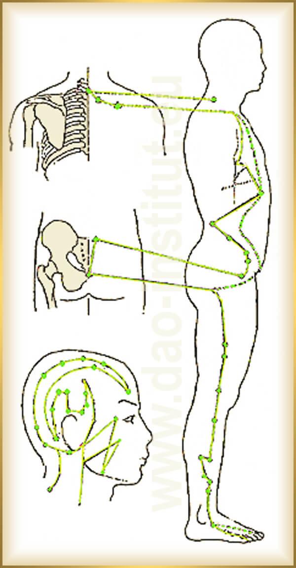 čínska-medicína-meridián-dráha-žlčníka