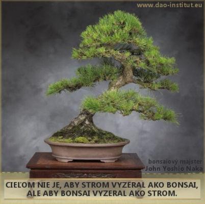dao-dharma_11-12-bonsai